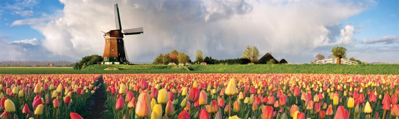 dutch nederlands course kursus